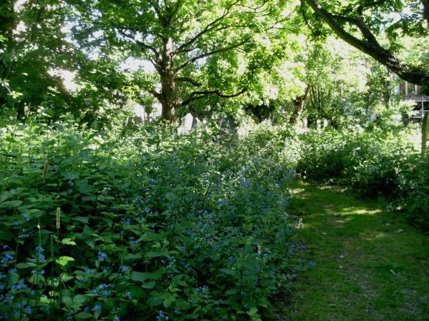St John's Churchyard trail 4