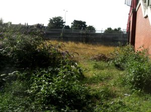 Transition Leytonstone Community Garden site