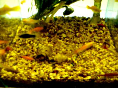 Dogs Dinner fish tank