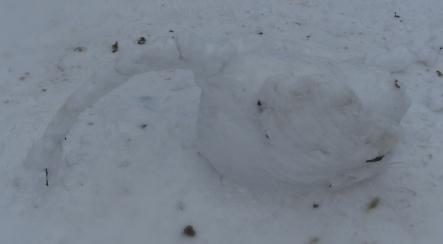 Hollow Ponds Snow Swan