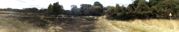 Hollow Ponds after the fire