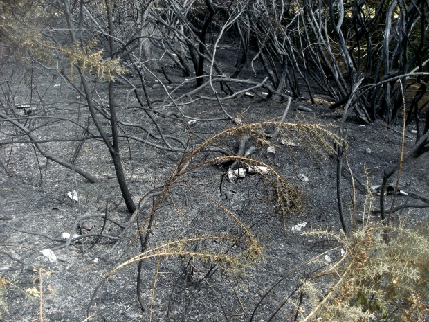 Fire damage reveals the litter problem